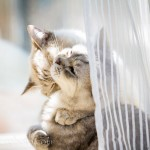 wpid-2012_05_13_kitties_0014.jpg