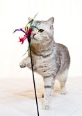 2012_02_04_kitties_0009.jpg