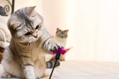 2012_02_04_kitties_0057.jpg