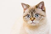 2012_02_04_kitties_0096.jpg