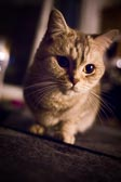 2012_09_26_kitties_0004.jpg